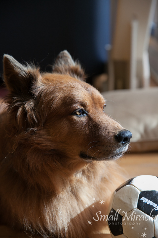 dog in the sun with his soccer ball