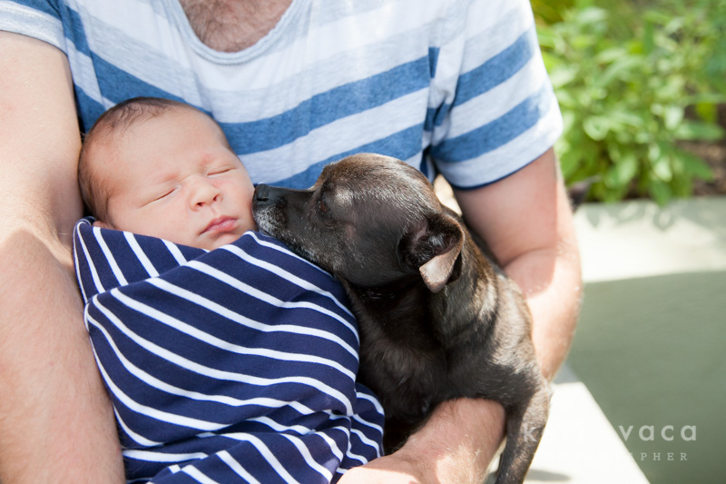 doggie licking sleeping newborn baby